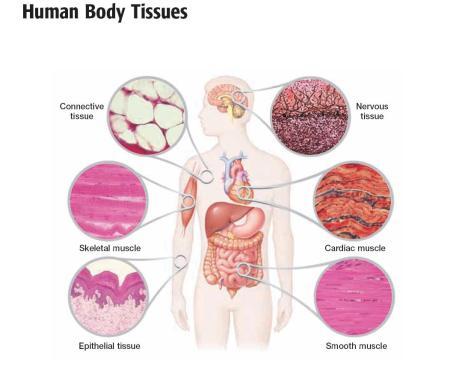 tissue_types