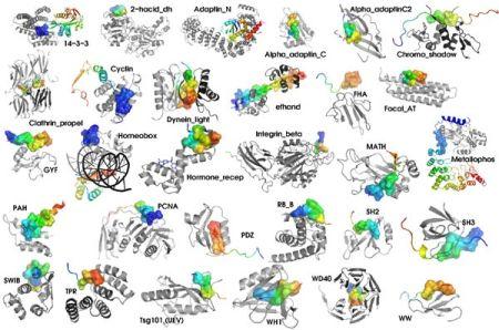 InteraccionsProteines_big