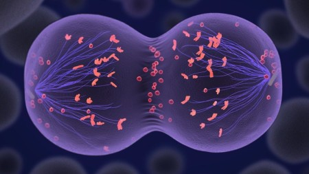 division-celular